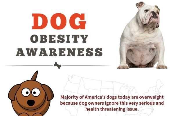 Dog obésité sensibilisation Infographic